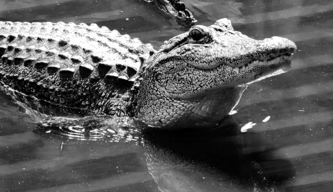 gator5